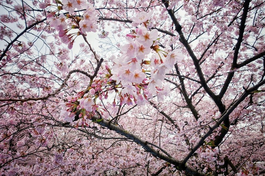 Make the Most Out of Spring Break in Tokyo