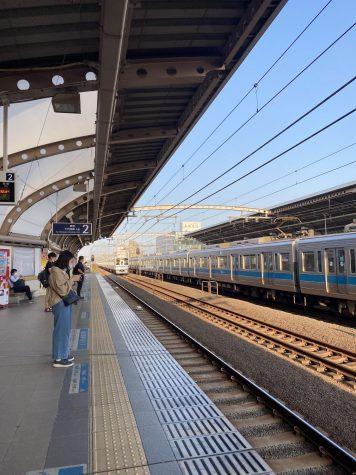 セミ in Tokyo