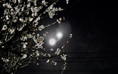 Navigation to Story: A Tokyo Bathed in Two Moons and Other Strange Sights: Murakami's 1Q84