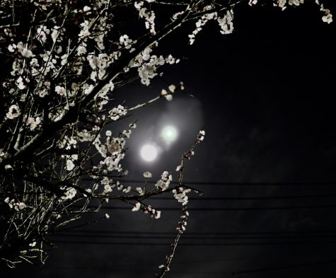 A Tokyo Bathed in Two Moons and Other Strange Sights: Murakami's 1Q84
