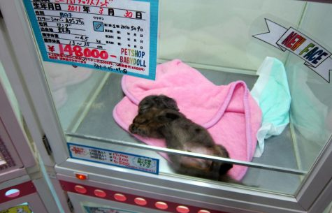The Ugliness of Pet Stores